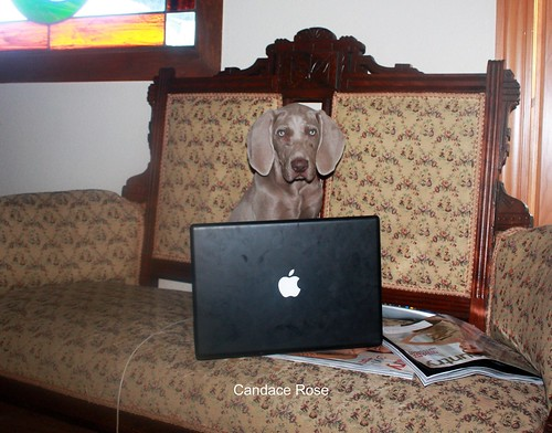 Fred loves his macbook