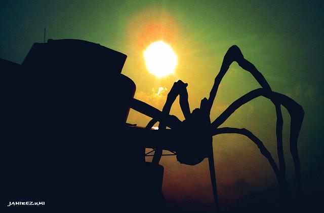 Spider_HARINEZUMI