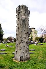 TREE MONUMENT