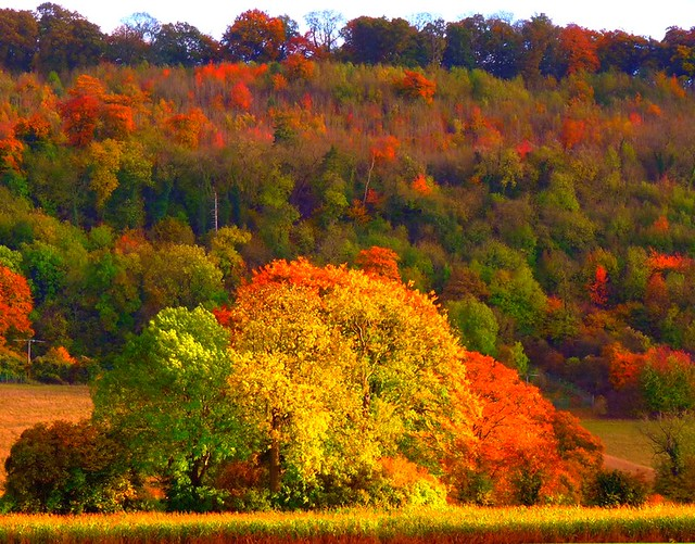 Legendary Autumn in The Chilterns