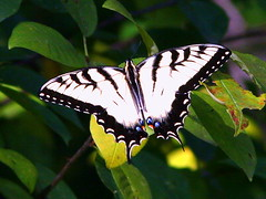 Butterfly and Moth Life List