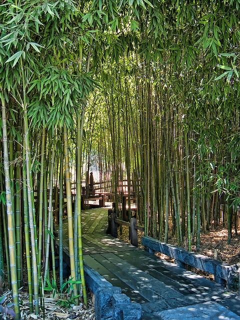 Walkway Through Bamboo Grove At Huntington Gardens In