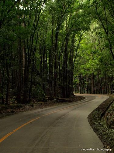 Bilar forest