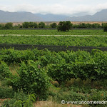 Bolivian Vineyard - El Valle, Bolivia