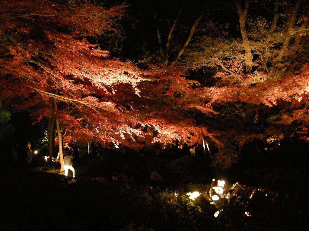 Photo:大田黒公園の紅葉 By:Satoshi Kobayashi