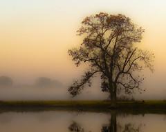 blurr pond refllection