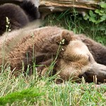 Woodland Park Zoo Seattle 074