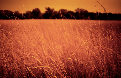 film field grass 35mm pentax fnd sonomacounty mesuper drycreekvalley redscale autaut
