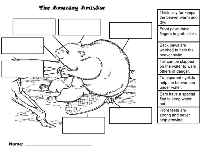 Animal Needs Worksheet Grade 3 http://www.flickr.com/photos/alanahmontreal/4008234383/
