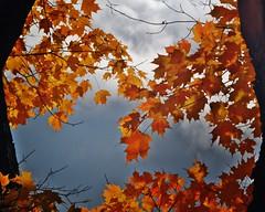 Leaves framed by tree-trunks