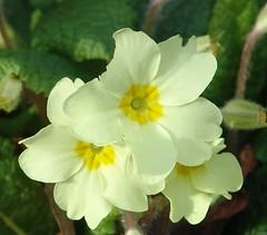 annual plant(1.0), flower(1.0), plant(1.0), wildflower(1.0), flora(1.0), herbaceous plant(1.0), petal(1.0),
