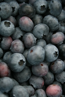 blueberry gather