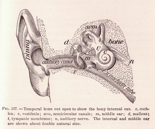 page 241 Internal Ear