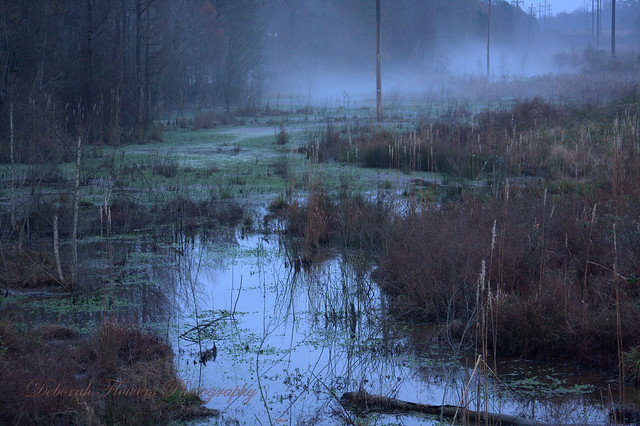 Boggy Swamp | F... Forgotten Realms Art