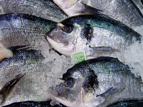 Green living tips avoiding mercury in fish which fish for Why do fish have mercury