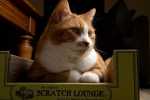 Pet Scratch