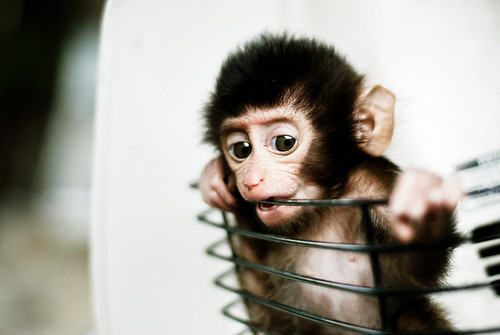 Funny monkey, Baby Monkey in a Basket