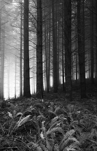 road trees blackandwhite bw oregon forest canon eos 1022mm gravel 1022 mcminnville 40d