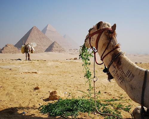 world monument lunch temple sand ancient break view desert pyramid plateau great egypt donkey moses eat cairo camel stop seven snack egyptian limestone rest giza necropolis wonders khufu cheops khafre menkaure chepren mykerinos platinumheartaward الجيزة