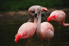 ibis(0.0), animal(1.0), fauna(1.0), beak(1.0), flamingo(1.0), bird(1.0), wildlife(1.0),