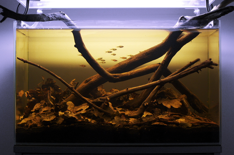 Considering a amazon acid pool type biotope practical for Amazon fish tanks