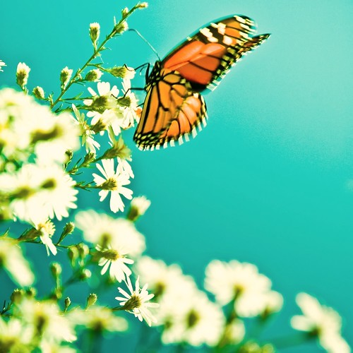 Butterfly Flowers by ►CubaGallery