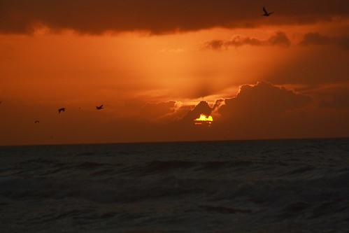 ocean sun pelicans sunrise nc northcarolina northtopsailbeach onslowcounty