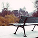 Parisian Bench In Winter