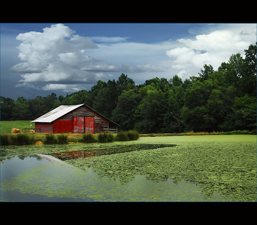 barn landscape pond cows alabama familyreunion reflexions shiningstar hodges aphoto royalgroup ruralexcellence aplusphoto colorsoftheheart thenewacademy museofotográfico vosplusbellesphotos seasons'magic thearcadiasociety splendidpictures