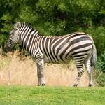 Woodland Park Zoo Seattle 037