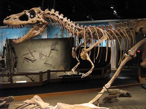 albertosaurus albertosaur tyrannosaurid theropod tyrannosaurus tyrannosaur fossil skeleton