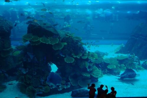 Qué ver en Dubai: Acuario en el centro comercial Dubai Mall qué ver en dubai - 3839710207 0dee1be92a - Qué ver en Dubai, el oasis inacabado
