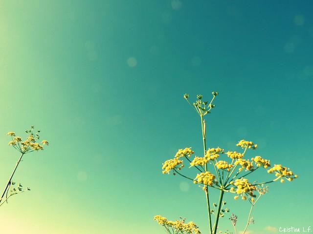 Light up, light up. from Flickr via Wylio