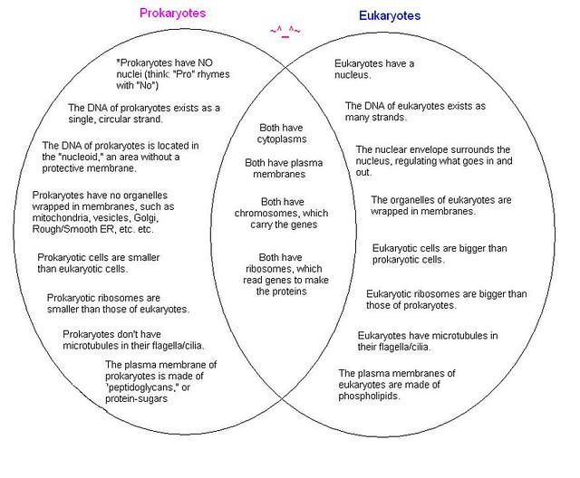 Essay Format Diagram