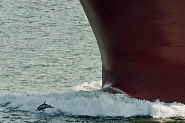 Big Ol' Dolphin