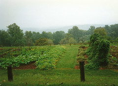 6176 Vegetable Garden at Monticello