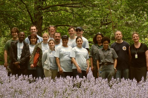 Moody's Volunteers in Bluebell Wood