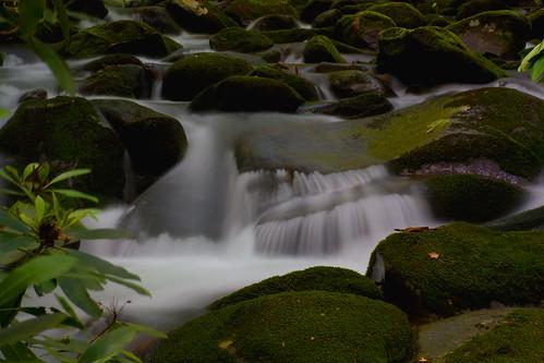 longexposure water waterfall nc moss rocks northcarolina rhododendron greatsmokiesnationalpark swaincounty davidhopkinsphotography