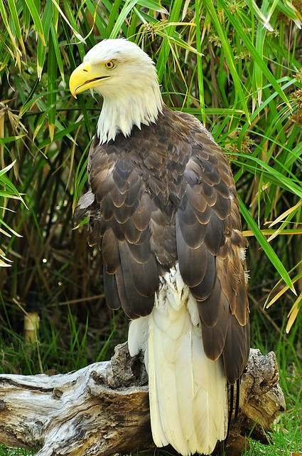 Aguila by Leonardo Favio