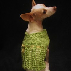 Lime Green Dog Sweater