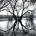 Un árbol by Claudio ©