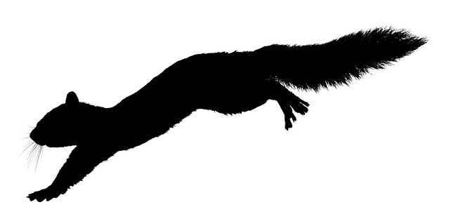 Leaping Squirrel Silhouette