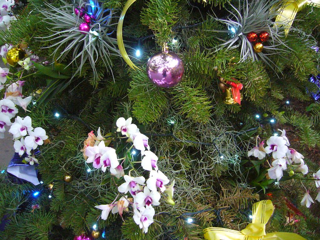 Orchid Christmas Tree.Orchid Christmas Tree Evelyn Lim Flickr