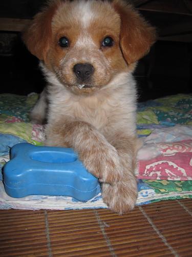more puppy pics! - 02