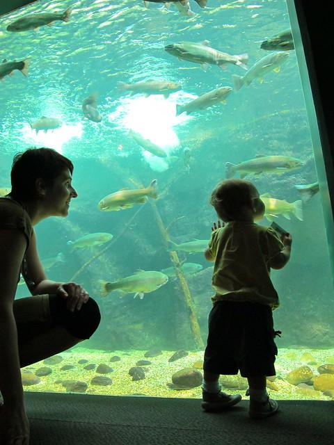 aquarium du val de loire flickr photo