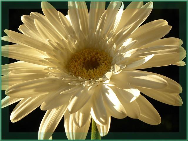Jeux de lumi re naturelle large vue by nicolas gent flickr photo - Deflecteur de lumiere naturelle ...