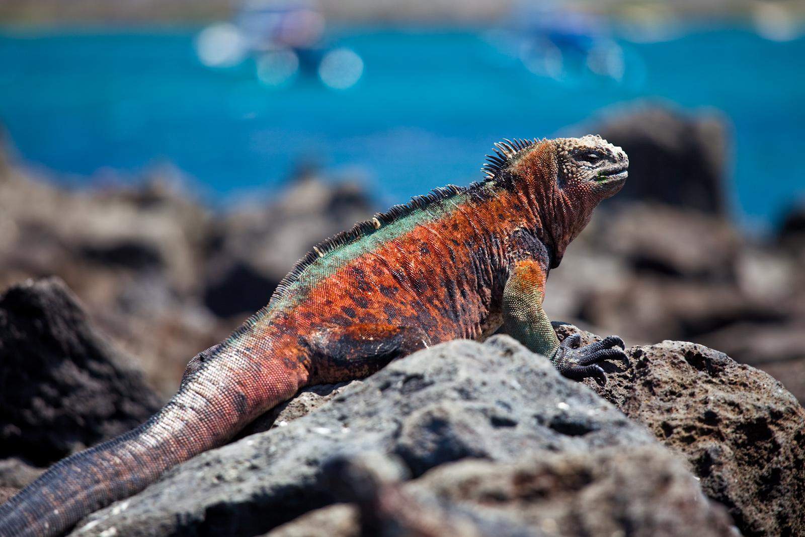 Galapagos Cruise Highlights