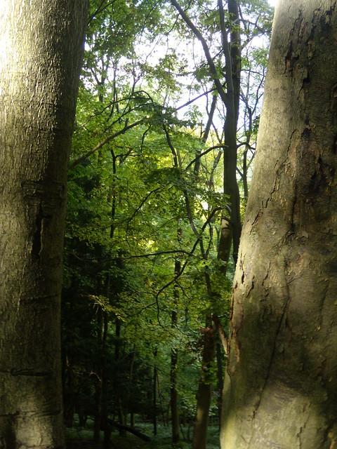 Trees behind trees