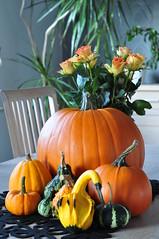 orange, vegetable, flower, pumpkin, calabaza, produce, winter squash, floristry, still life photography, still life, cucurbita, gourd,