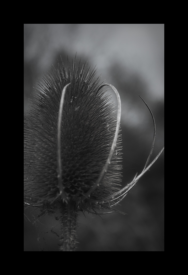 Photography: Spiny Frills by Nicholas M Vivian